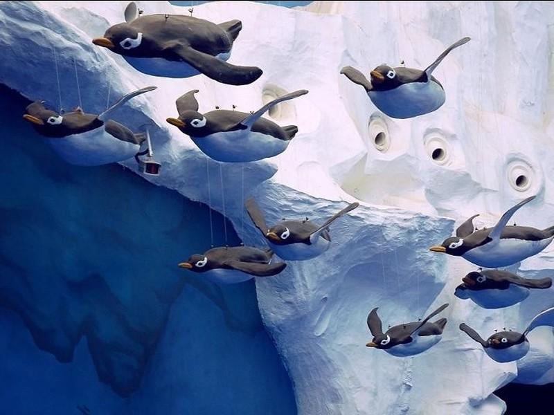 青岛极地海洋世界:与极地接触,与海豚共舞