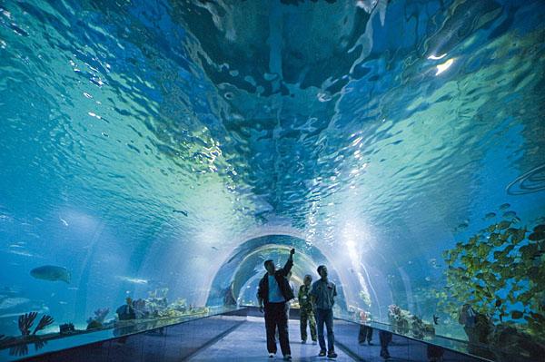 """泉城海洋极地世界""""我和妈妈有个约会""""免费畅游活动"""