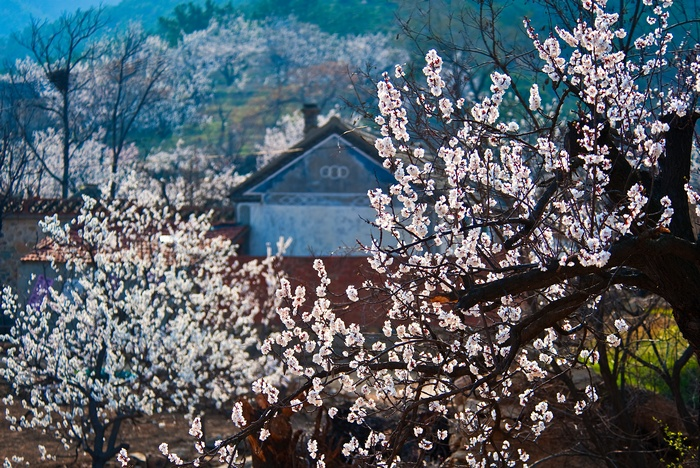 春天山上风景图片