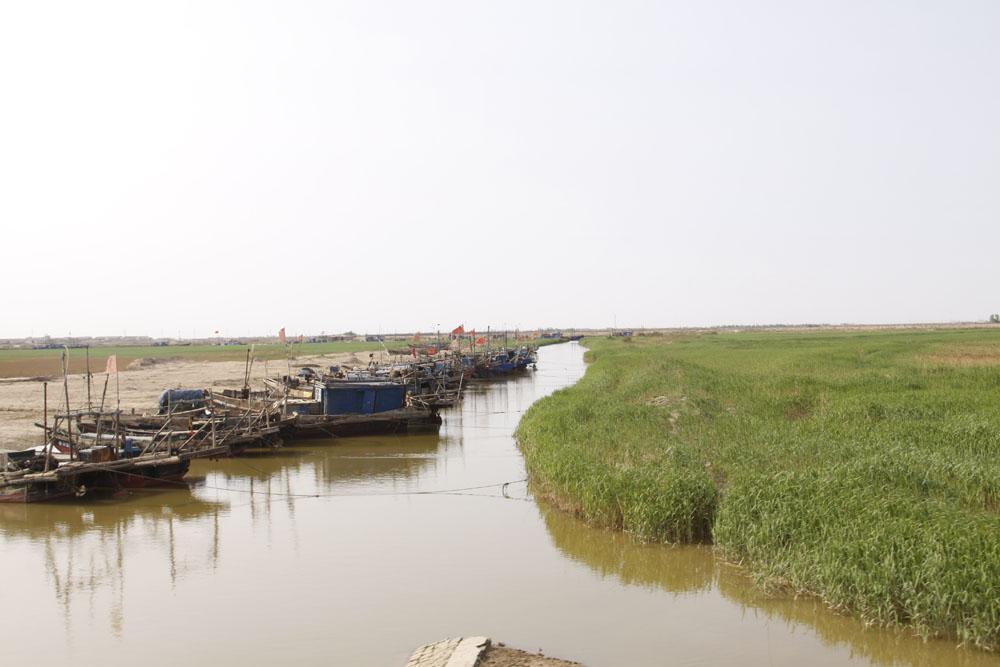 黄河三角洲生态文化旅游岛