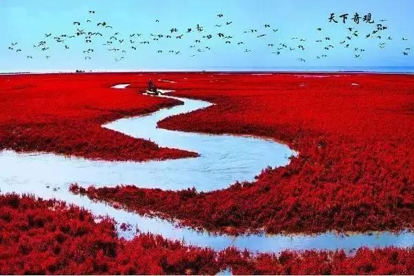 東營紅海灘   這里不僅僅是黃河的入???   更是我國及至世界暖