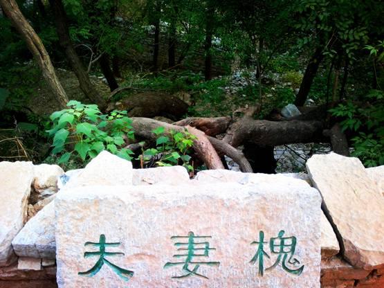 http://www.sdta.cn/uploads/1515388822/1515388855-image032.jpg
