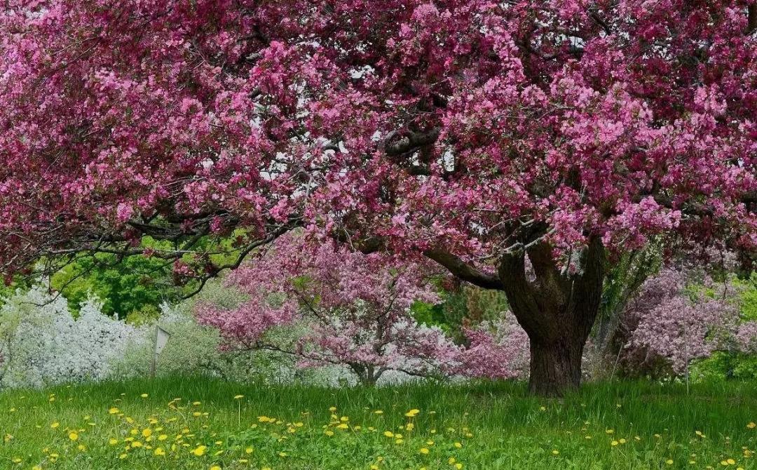 聊城春天风景图片